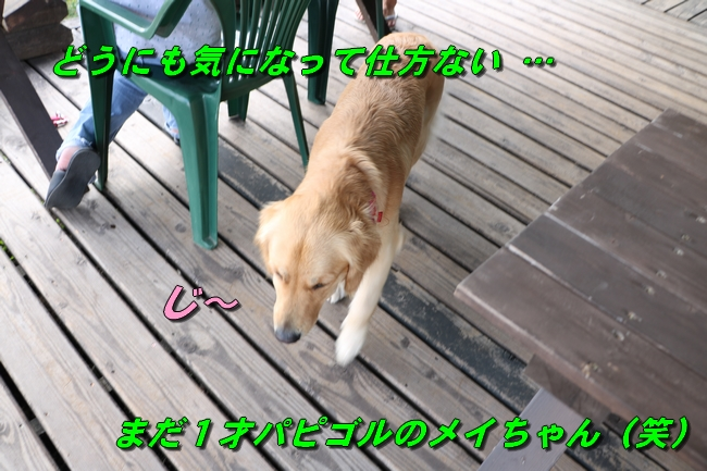 IMG_2162_201608231421500ad.jpg