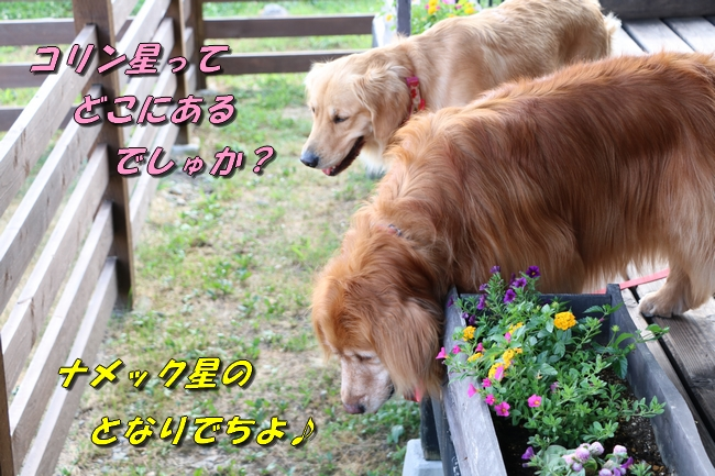 IMG_2180.jpg
