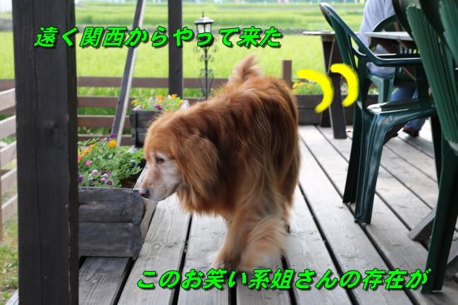 IMG_2182.jpg