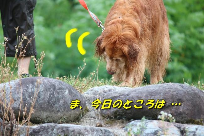 IMG_2316.jpg