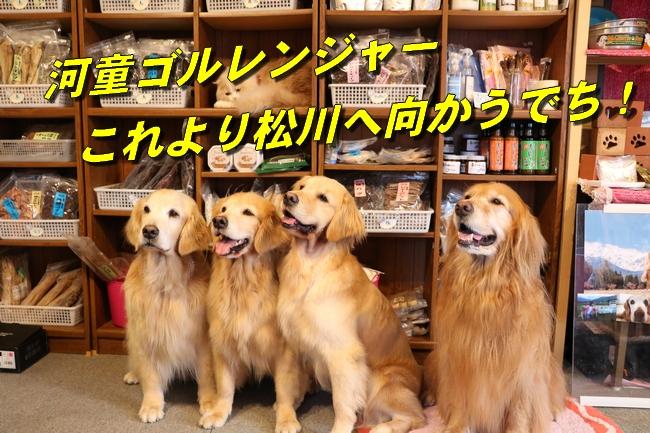 IMG_2442_20160830092244efa.jpg