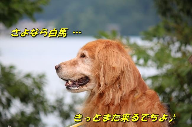 IMG_3961_20160913105215c1f.jpg