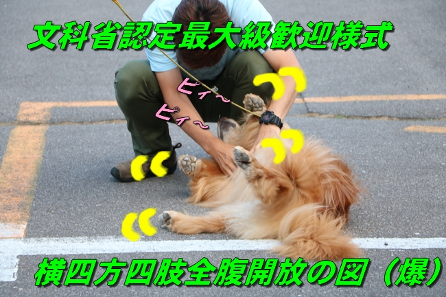 IMG_4110.jpg