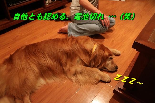 IMG_4478.jpg