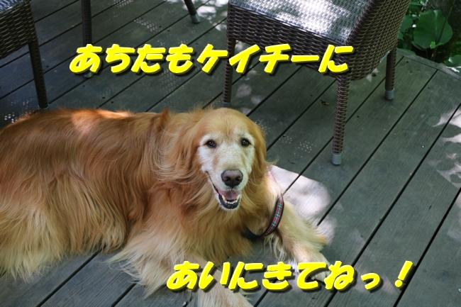 IMG_4727.jpg