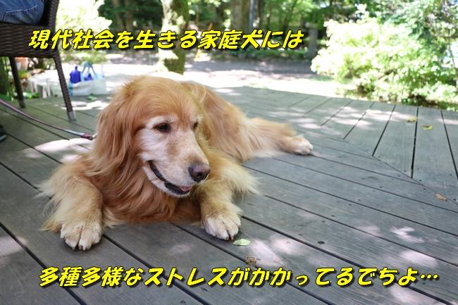 IMG_4746_201609211200232fc.jpg