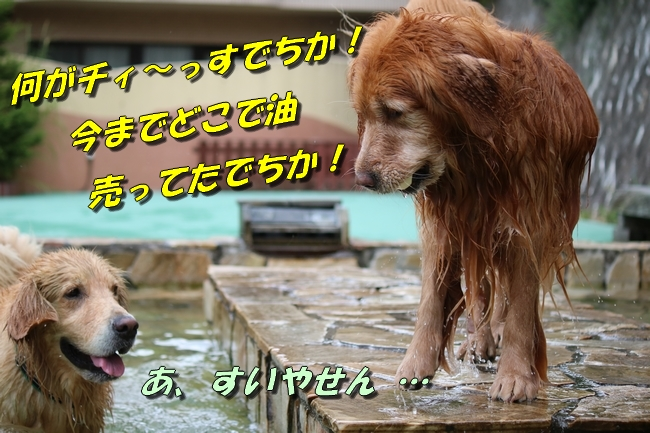IMG_5062.jpg