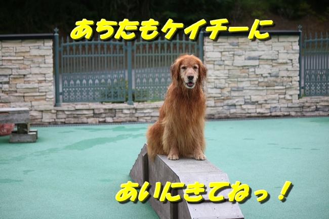 IMG_5236.jpg