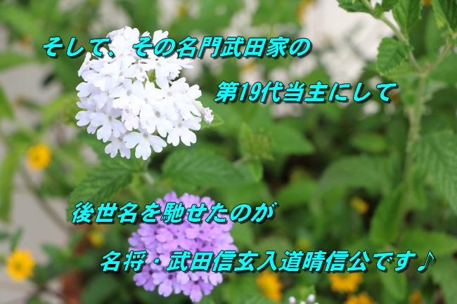 IMG_6127.jpg