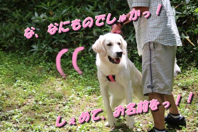 IMG_6510.jpg