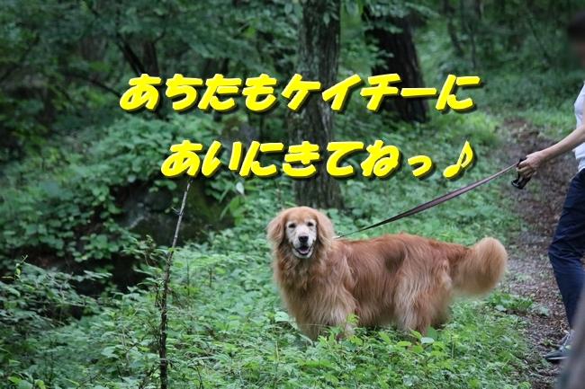 IMG_6533_20161019215339327.jpg