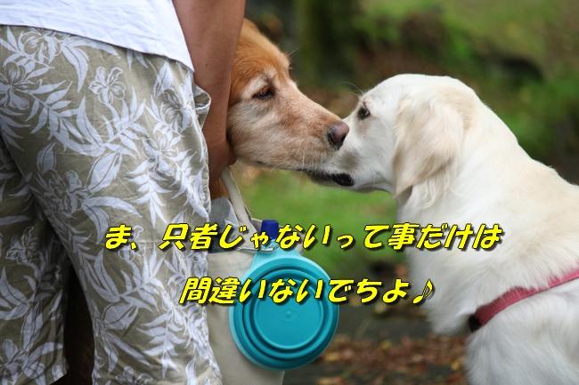 IMG_6558.jpg