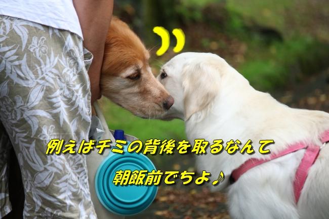 IMG_6559.jpg