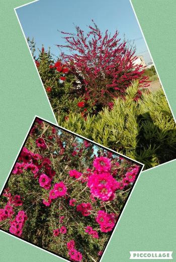 Collage+2016-05-18+14_07_54_convert_20160518144232.jpg