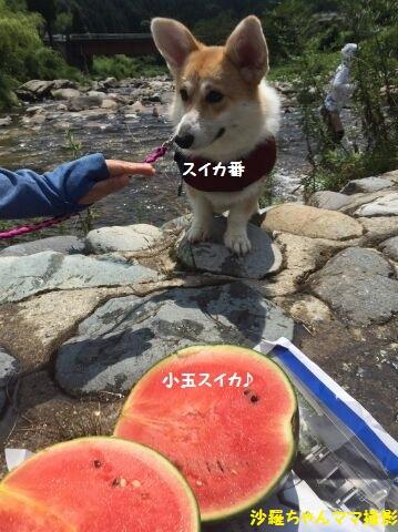 西瓜の番犬