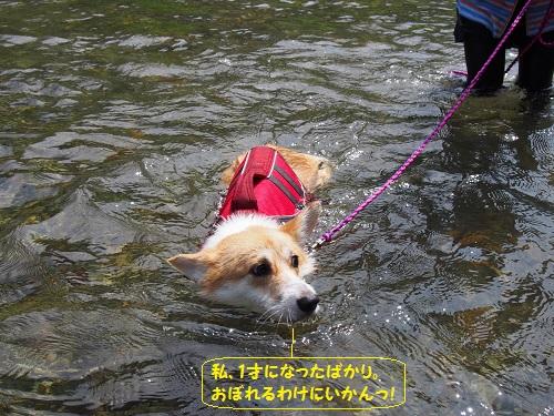 芹ちゃん泳ぐ1