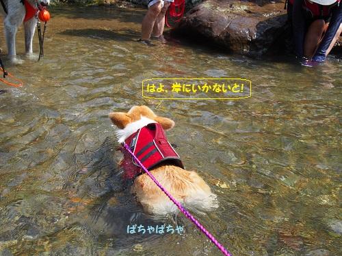 芹ちゃん泳ぐ4