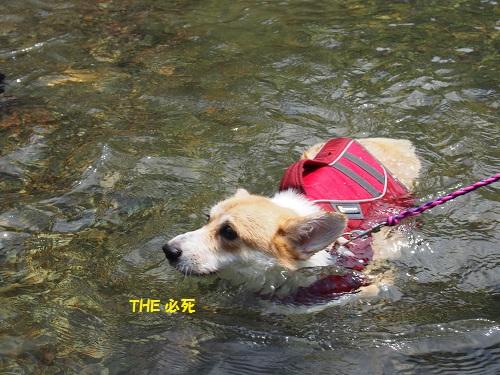 芹ちゃん泳ぐ6
