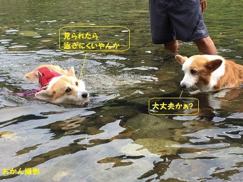 ちゃこちゃんの前で泳ぐ