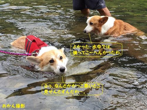 ちゃこちゃんの前で泳ぐ2