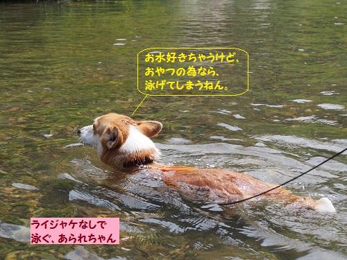 ライジャケなしで泳ぐあられちゃん