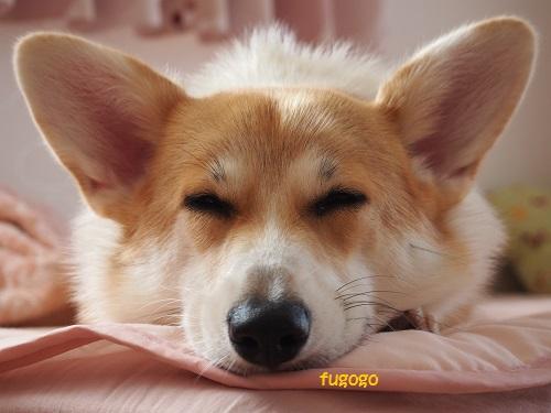 真正面の寝顔