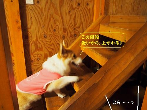 階段のぼる1