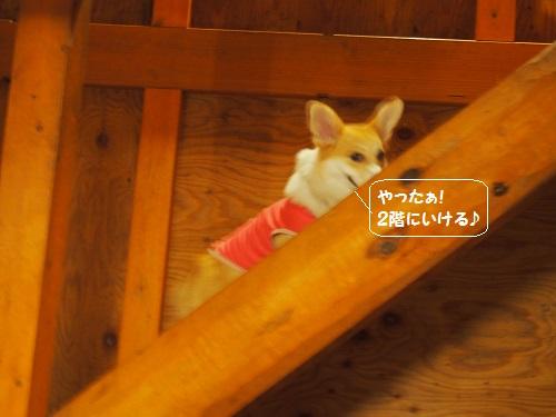 階段のぼる2