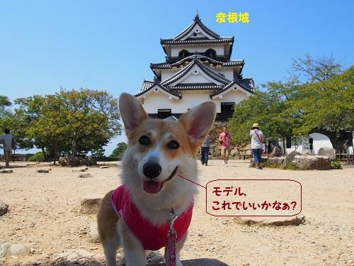 彦根城でパチリ