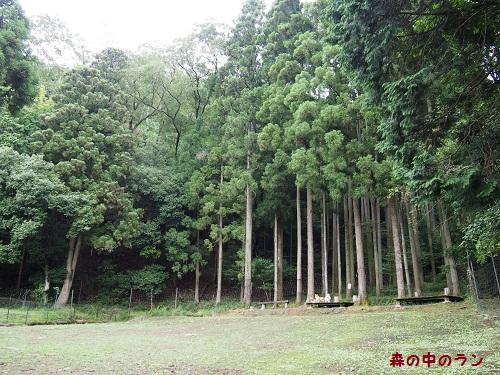 森の中のラン