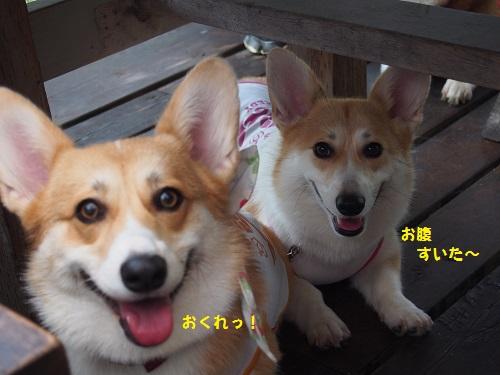 ササミくれ姉妹3