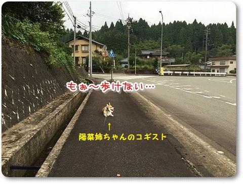 陽菜ちゃんコギスト