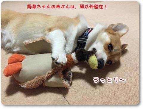 陽菜ちゃんと鳥さん