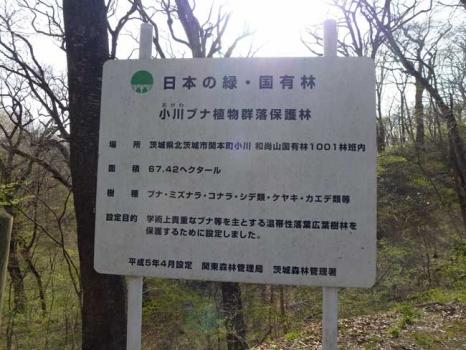 小川ブナ林群落保護林」の看板
