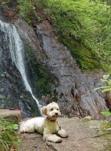 夢想滝とマルピ