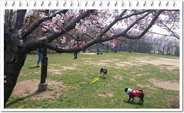 樽川公園①