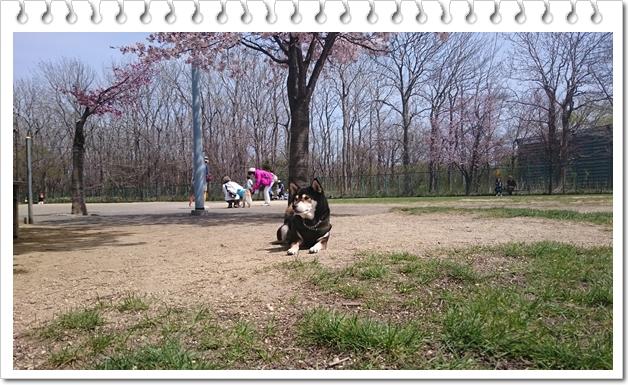 樽川公園③
