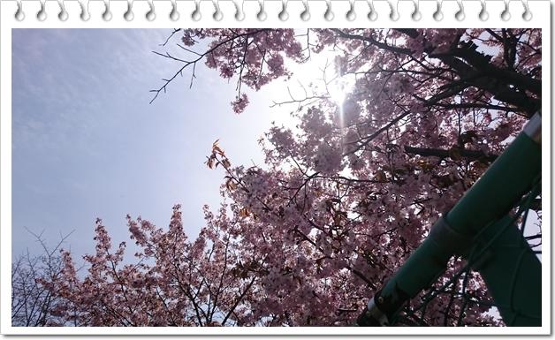 樽川公園④
