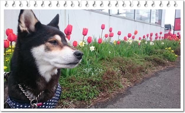 日常散歩①