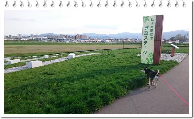 空港緑地⑬