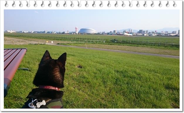 空港緑地②