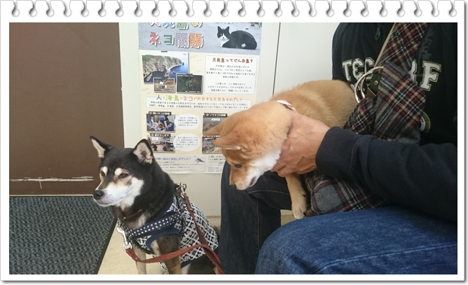 太郎のワクチン③