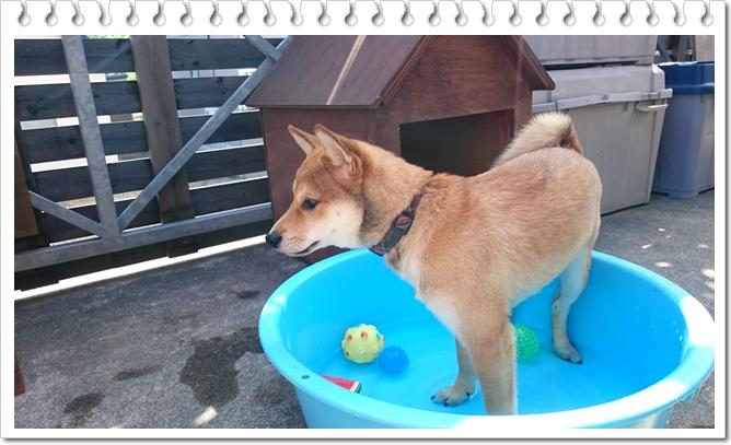 プール学習②