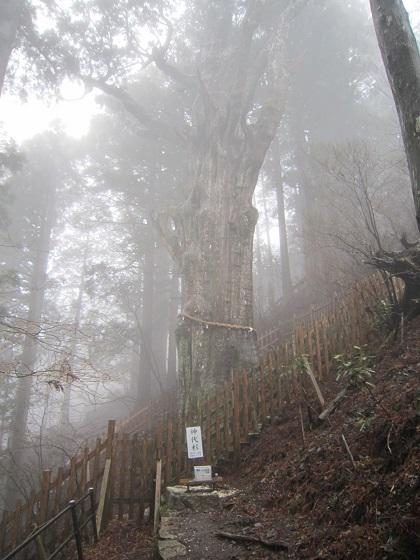 玉置神社 神代杉