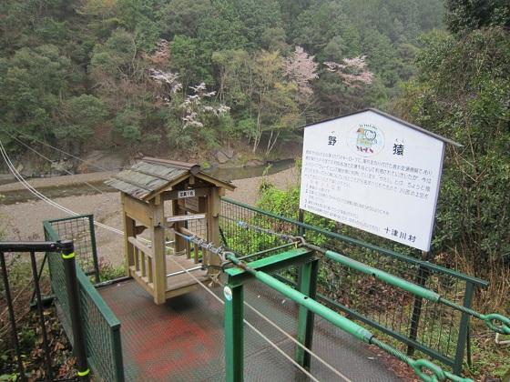 十津川 野猿