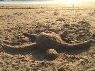 砂浜アートのウミガメ