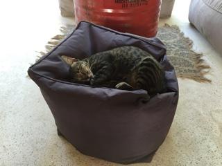 宿の猫「ココ」