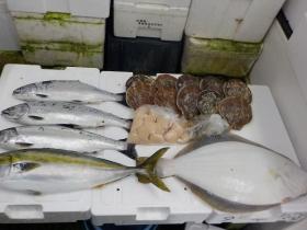 1鮮魚セット2016415