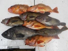 8鮮魚セット2016415