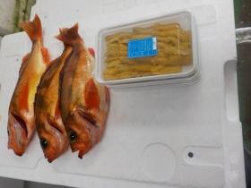 12鮮魚セット2016415